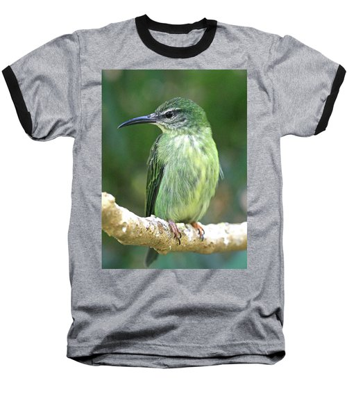 Purple Honeycreeper Female Baseball T-Shirt
