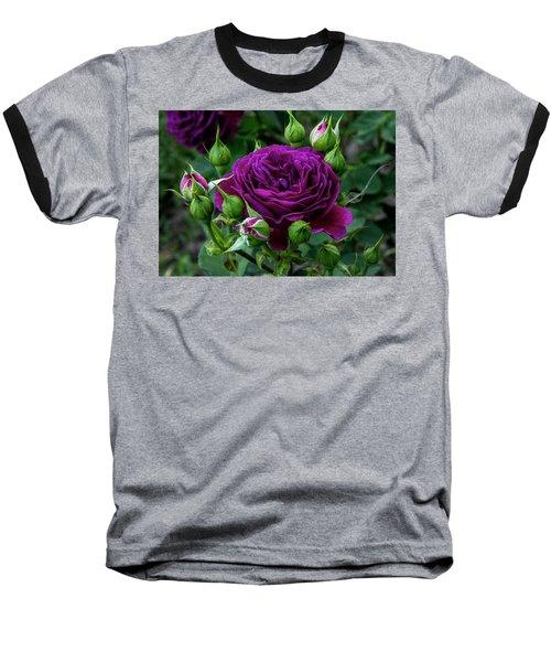 Purple Rose Baseball T-Shirt by Alex Galkin
