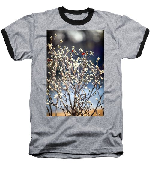 Pussy Willow Baseball T-Shirt by Robert Clifford