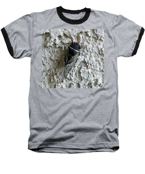 Baseball T-Shirt featuring the photograph Putnam's Cicada by Anne Rodkin