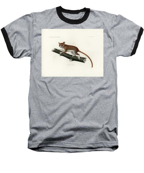 Pygmy Mouse Lemur Baseball T-Shirt