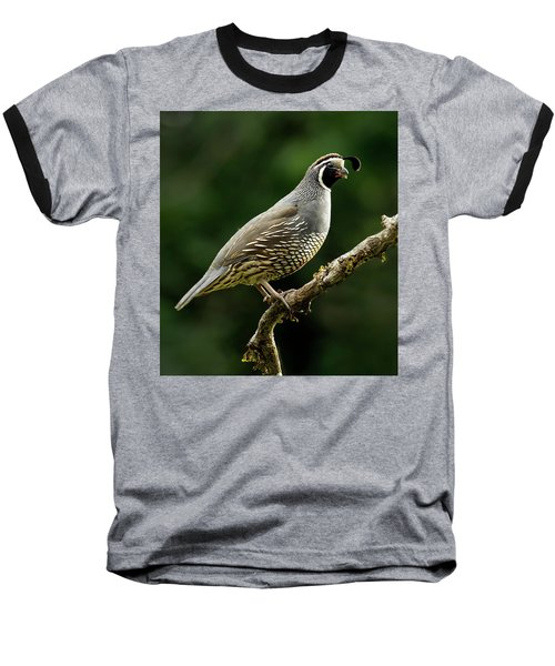 Quail  Baseball T-Shirt by Inge Riis McDonald