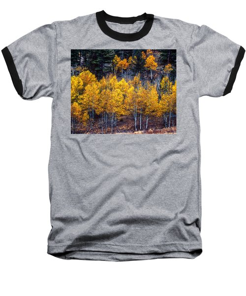 Aspen In Fall Colors In Eleven Mile Canyon Colorado Baseball T-Shirt by John Brink