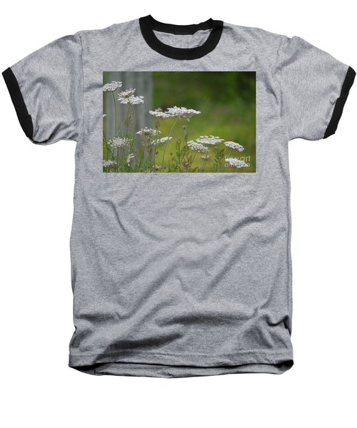 Queen Anne Lace Wildflowers Baseball T-Shirt by Maria Urso