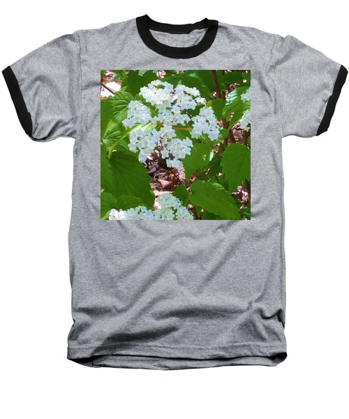 Queen Anne's Lace Baseball T-Shirt by Kay Gilley