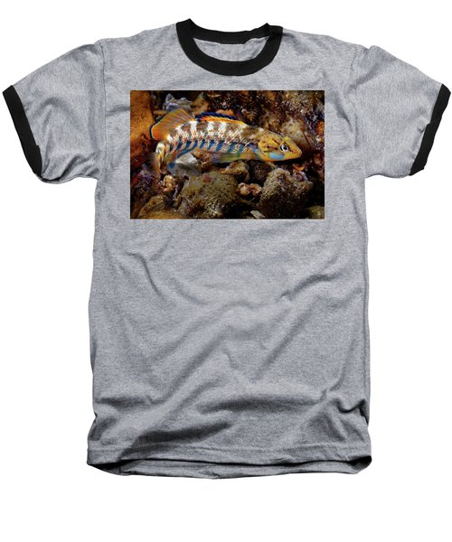 Rainbow Darter Baseball T-Shirt