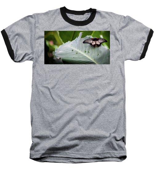 Raining Wings Baseball T-Shirt by Karen Wiles