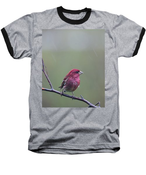 Baseball T-Shirt featuring the photograph Rainy Day Finch by Susan Capuano