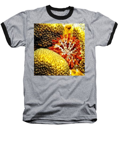 Rare Orange Tipped Corallimorph - Fire In The Sea Baseball T-Shirt