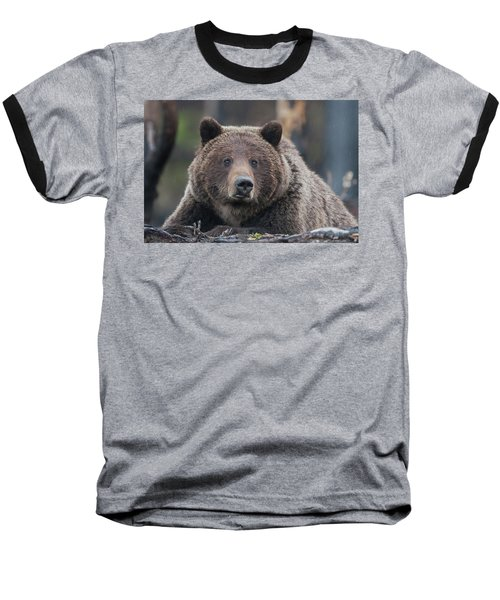 Raw, Rugged And Wild- Grizzly Baseball T-Shirt