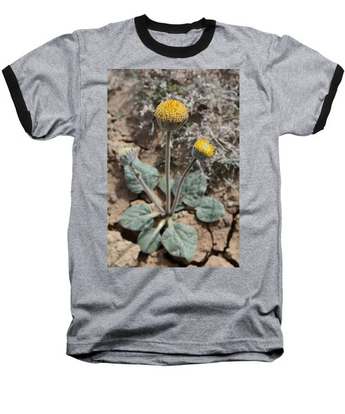 Baseball T-Shirt featuring the photograph Rayless Daisy by Jenessa Rahn