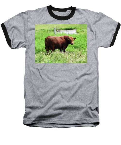 Red Angus Bull Baseball T-Shirt by J L Zarek