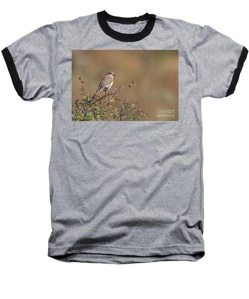 Red-backed Shrike Juv. - Lanius Collurio Baseball T-Shirt by Jivko Nakev