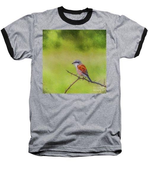 Red-backed Shrike Baseball T-Shirt