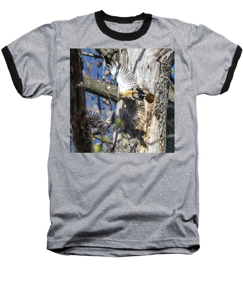 Red Bellied Woodpecker Chasing An Attacking Starling Baseball T-Shirt
