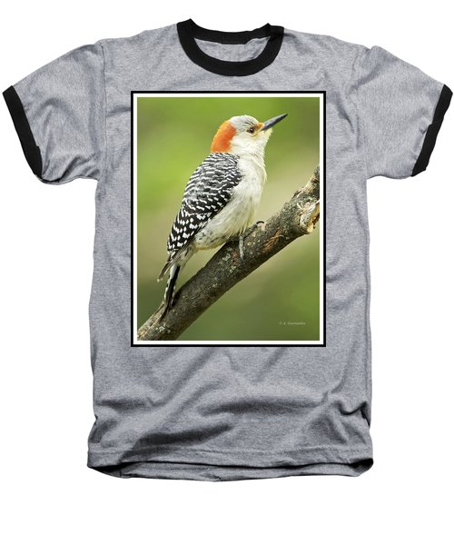 Red Bellied Woodpecker, Female On Tree Branch Baseball T-Shirt by A Gurmankin