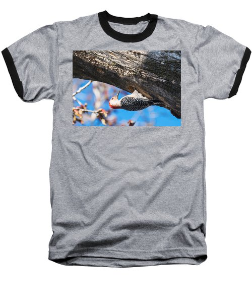 Baseball T-Shirt featuring the photograph Red-bellied  Woodpecker House Building by Edward Peterson