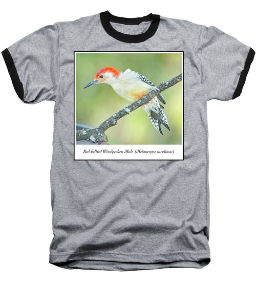 Red Bellied Woodpecker, Male Baseball T-Shirt by A Gurmankin