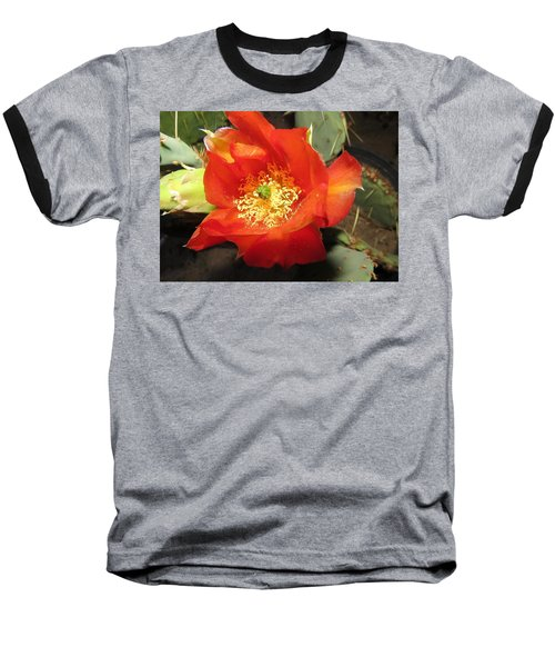 Red Bloom 1 - Prickly Pear Cactus Baseball T-Shirt