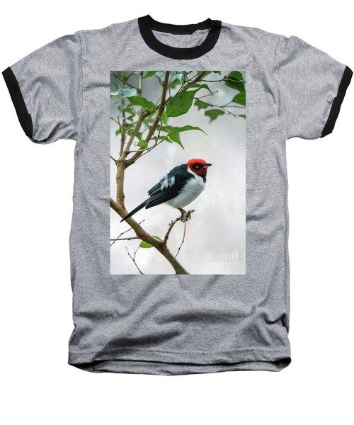 Red Capped Cardinal 2 Baseball T-Shirt