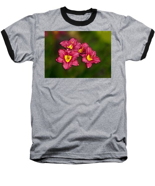 Red Columbine Hybrid Baseball T-Shirt by John Haldane