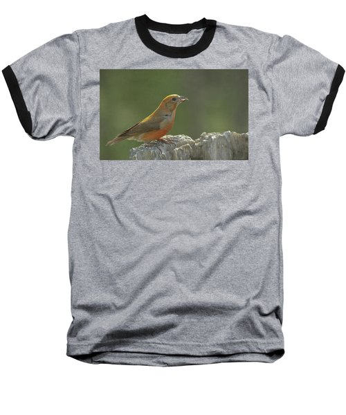 Red Crossbill Baseball T-Shirt by Constance Puttkemery