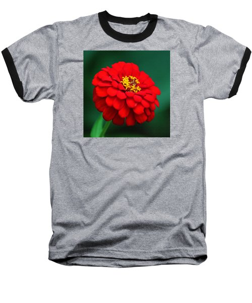 Red Dahlia In Pastel Baseball T-Shirt