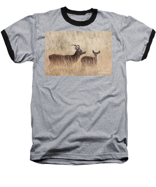 Red Deer Stag And Hind Baseball T-Shirt
