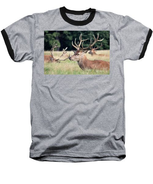 Red Deer Stags Richmond Park Baseball T-Shirt