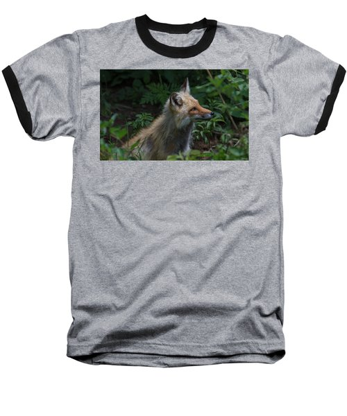 Red Fox In The Forest Baseball T-Shirt