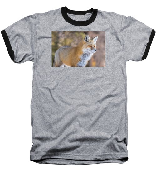 Baseball T-Shirt featuring the photograph Red Fox In Winter Glow by Yeates Photography