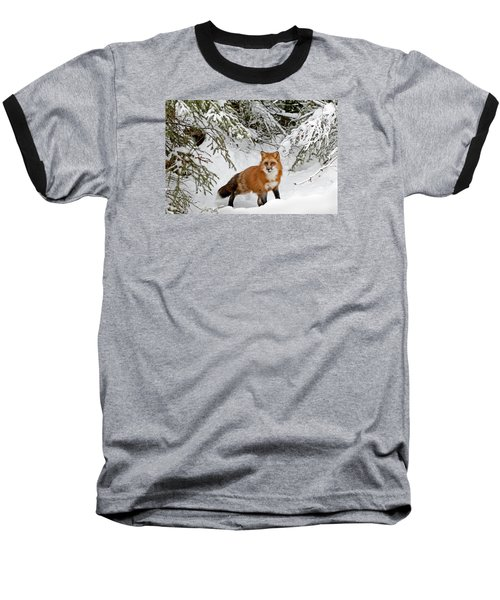 Red Fox In Winter Baseball T-Shirt