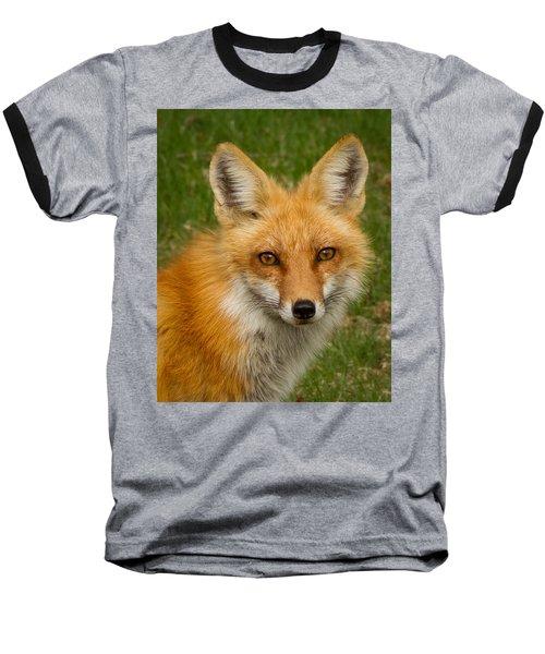 Red Fox Portrait Baseball T-Shirt by Brian Caldwell