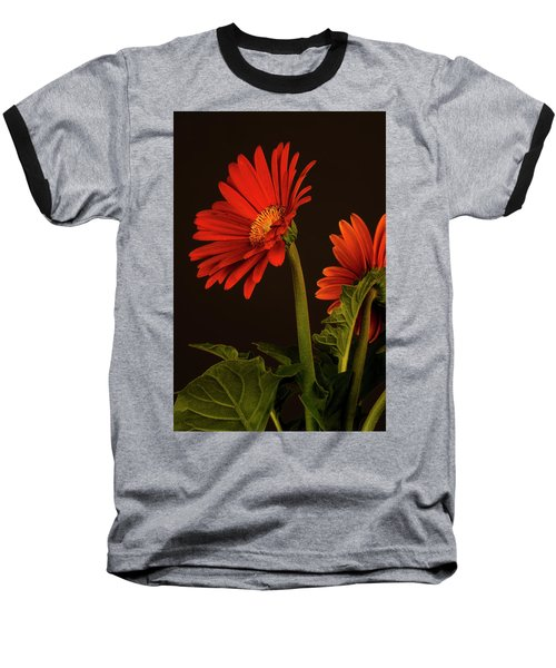 Red Gerbera Daisy 1 Baseball T-Shirt by Richard Rizzo