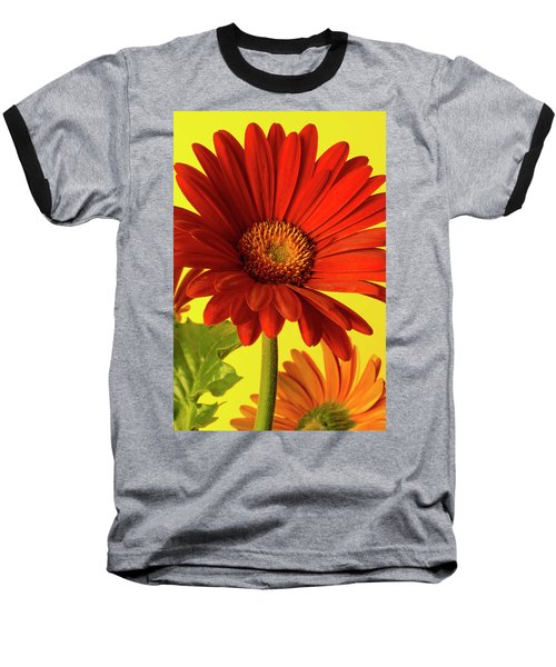 Red Gerbera Daisy 2 Baseball T-Shirt by Richard Rizzo