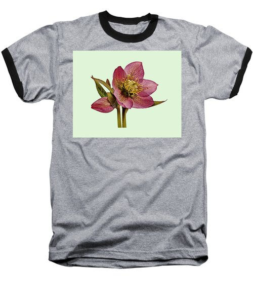 Baseball T-Shirt featuring the photograph Red Hellebore Green Background by Paul Gulliver