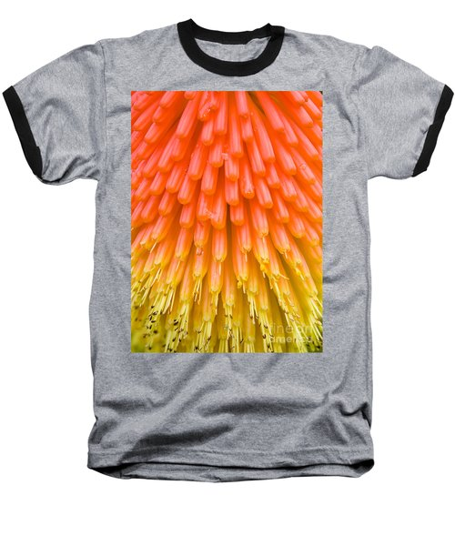 Red Hot Poker Flower Close Up Baseball T-Shirt by Colin Rayner