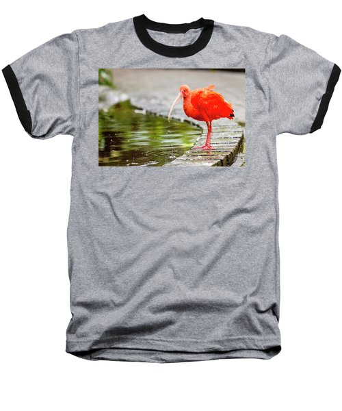 Baseball T-Shirt featuring the photograph Red Ibis by Alexey Stiop