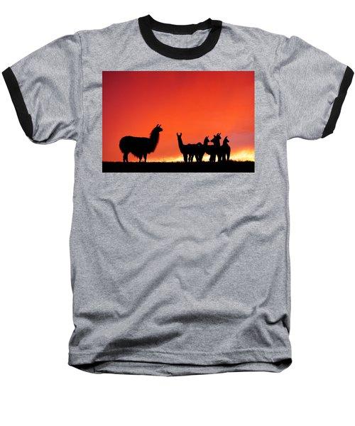 Red Llama Sunset 2 Baseball T-Shirt