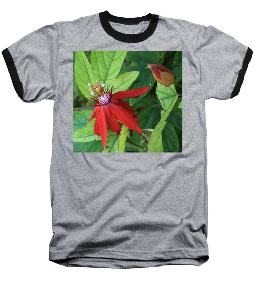 Red Passion Bloom Baseball T-Shirt by Marna Edwards Flavell