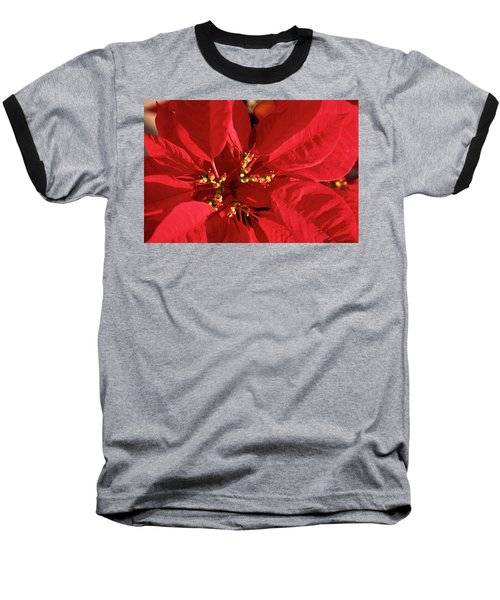 Red Poinsettia Macro Baseball T-Shirt by Sally Weigand