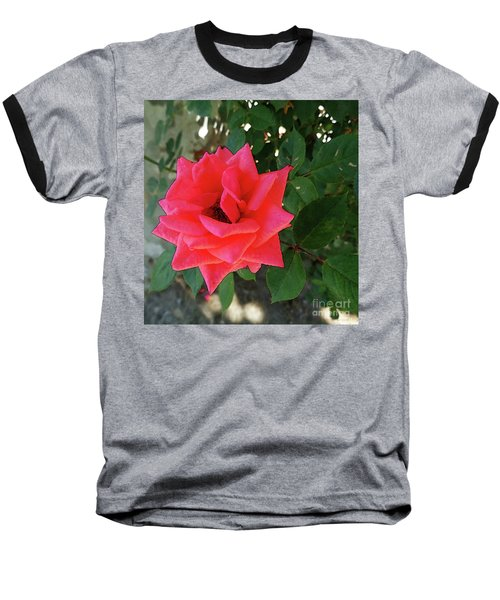 Pink Rose  Baseball T-Shirt by Don Pedro De Gracia