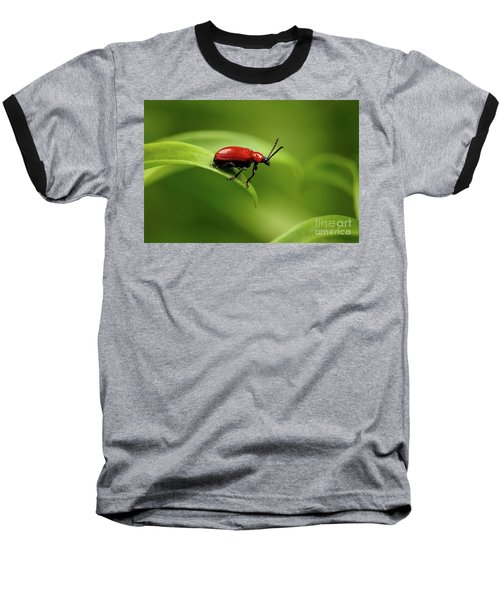 Red Scarlet Lily Beetle On Plant Baseball T-Shirt