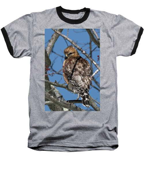 Baseball T-Shirt featuring the photograph Red Shouldered Hawk 2017 by Bill Wakeley