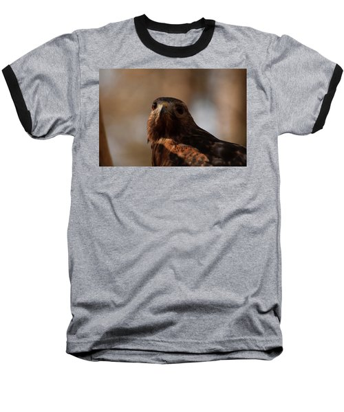 Red Shouldered Hawk Close Up Baseball T-Shirt by Chris Flees