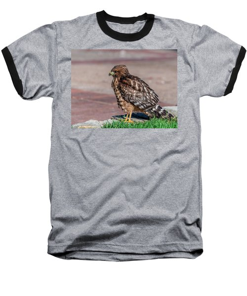 Red-shouldered Hawk Baseball T-Shirt by Martina Thompson