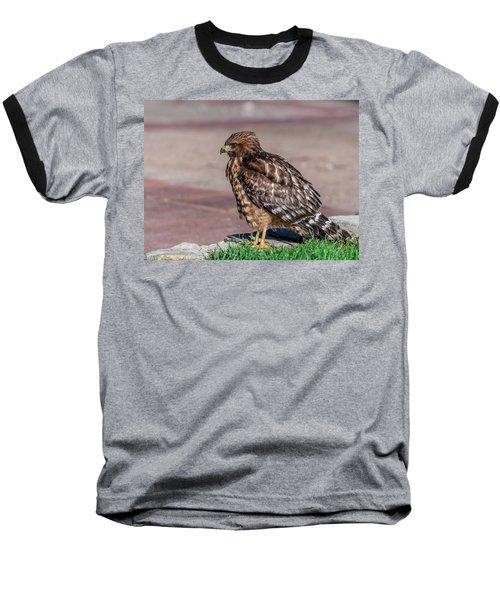 Red-shouldered Hawk Baseball T-Shirt