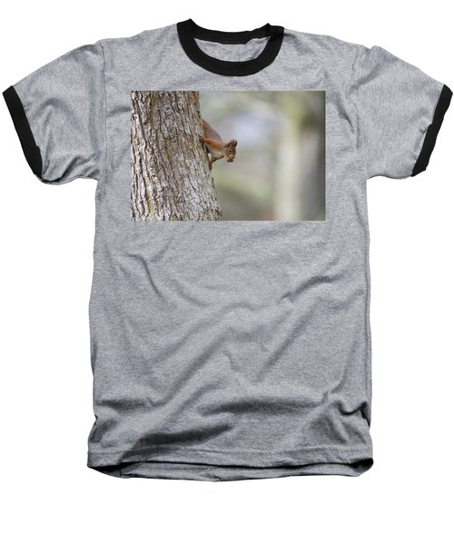 Red Squirrel Climbing Down A Tree Baseball T-Shirt