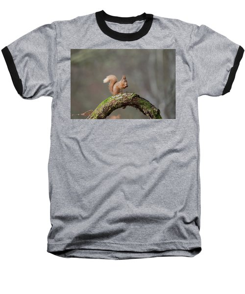 Red Squirrel Eating A Hazelnut Baseball T-Shirt