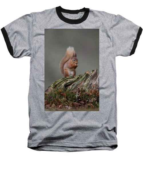 Red Squirrel Nibbling A Nut Baseball T-Shirt